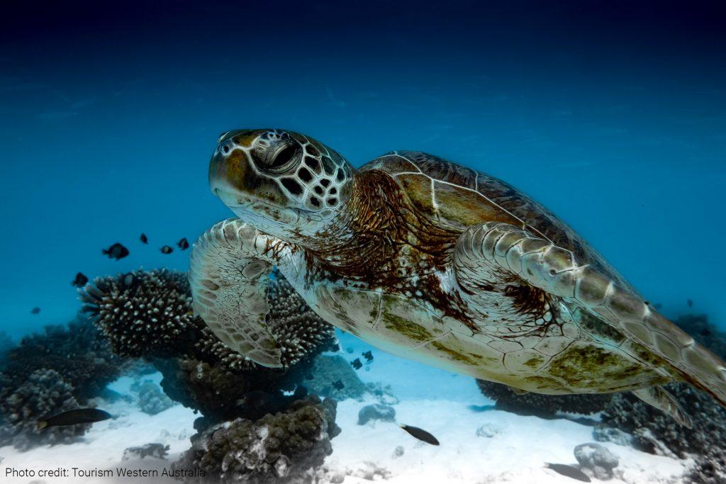 Ningaloo Reef Marine Park